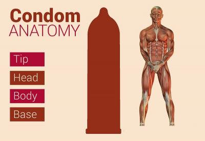 Condom Anatomy - Top to Bottom